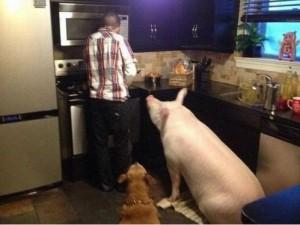 Bacon_Makin'_Bacon