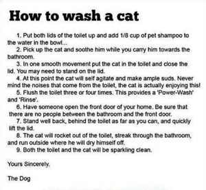 Cats_How_To_Wash