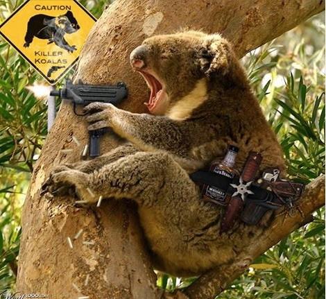 Guns_Killer_Koala.jpg