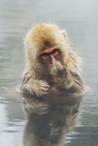 Monkey_Finger