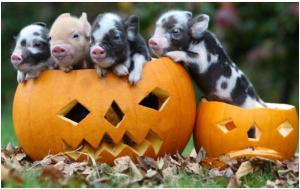 Bacon_Bacon_Bits_And_Pumpkin_Pie