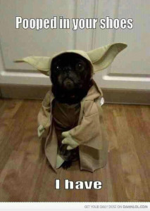 Dog_Yoda_Pooped_In_Shoes_I_Have