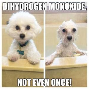 DiHydrogen_Monoxide_Wash_Puppy