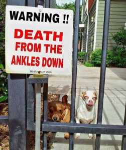 Dogs_Ankle_Biters