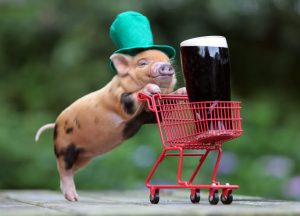 Bacon_Bacon_And_Beer_Piggie