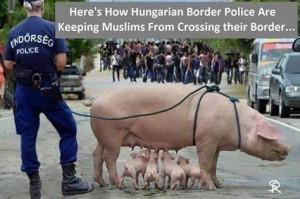 Islam_Hungarian_Pig_Protects_Border_Crossing