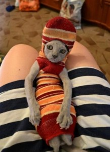 Cat_Doobie_In_Sock