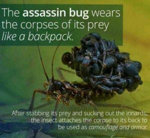 Hillary_Assasin_Bug