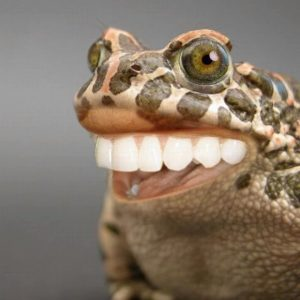 WTF_Frog_Teeth