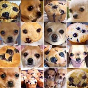 Dogs_Cookie_For_My_Cookie