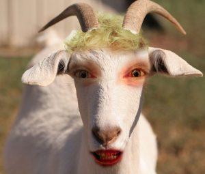 Goat_Pretty_For_Mo_05
