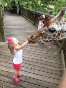 Giraffe_A_Mouth_Full