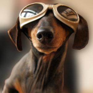 dog_debate_dog