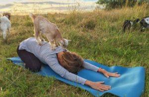 goat_yoga