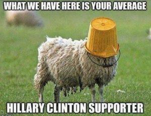 sheep_with_bucket_helmet