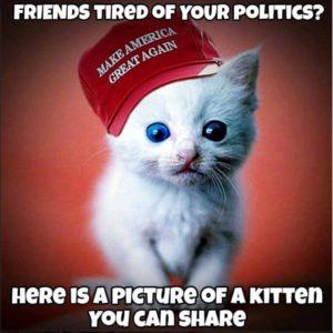 cats_maga_kitten