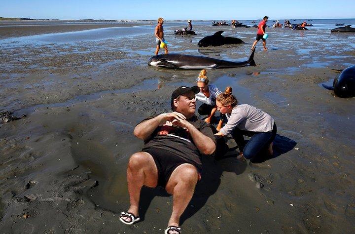 Chris_Christie_BeachGate_Whale_Rescue_Edition douchebag archives thepubliceditor com