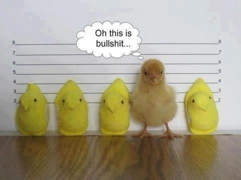 Peeps_Chicken_In_Lineup