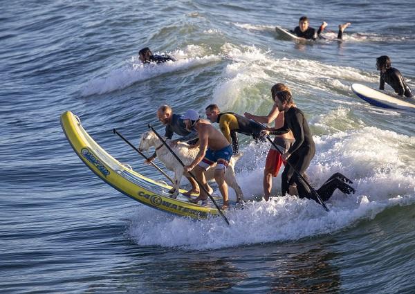 Goat_Surfing_06